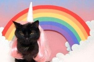 licornes-chats-internet